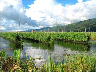 Chinampas, An Aztec Way of Farming - Facts on Ancient ...